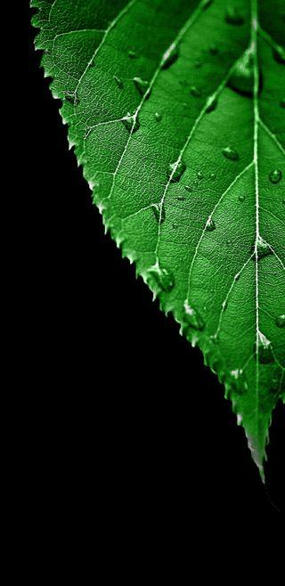 Обои на телефон яркие, макро, черные, природа, листья, зеленые, амолед, s8, qhd, hd, amoled