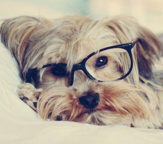 Обои на телефон питомцы, собаки, милые, комедия, животные, cute dog