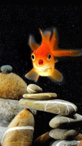 Обои на телефон подводные, рыба, природа, оранжевые, океан, море, золотые, животные