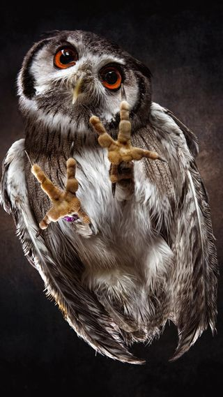 Обои на телефон юмор, экран, телефон, стекло, сова, птицы, забавные, phone screen, owl on the screen