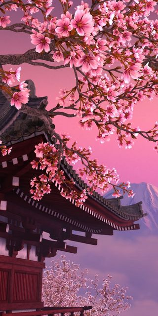 Обои на телефон вишня, цвести, сакура, дерево, sakura tree, cherry blossom tree