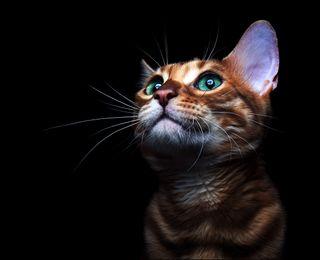Обои на телефон приятные, милые, кошки, котята, коты, hd