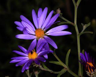 Обои на телефон лотус, цветы, фиолетовые