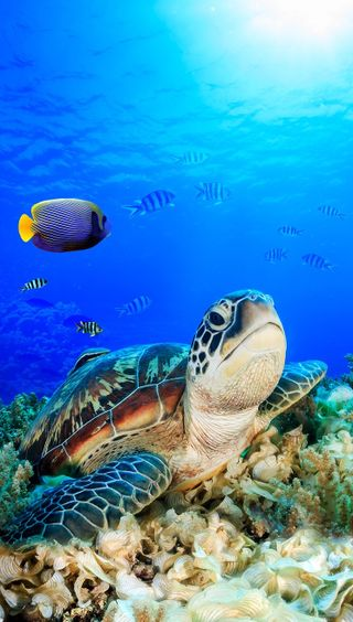 Обои на телефон черепаха, синие, рыба, рай, природа, океан, море, sea turtle, save, blue ocean