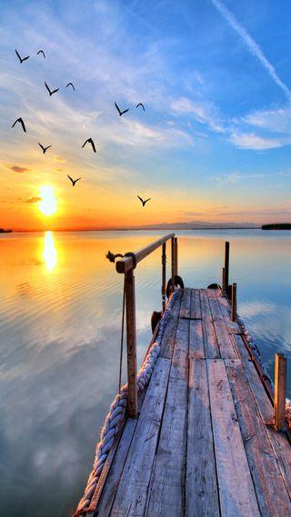 Обои на телефон птицы, солнце, природа, прекрасные, облака, небо, море, закат