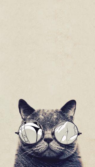 Обои на телефон мото, кошки, moto g