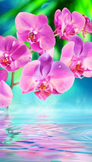 Обои на телефон растения, цветы, природа, орхидея, вода