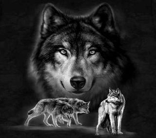 Обои на телефон волк, прекрасные, beautiful  wolfs