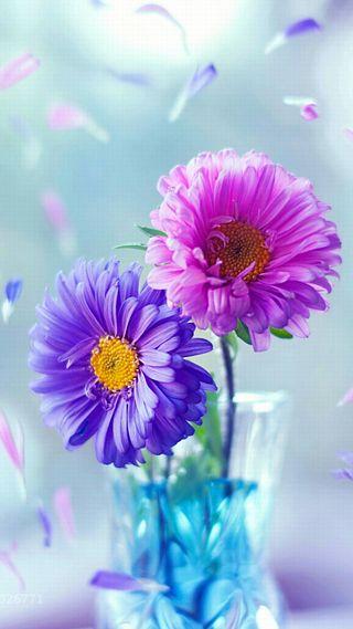 Обои на телефон весна, цветы, фиолетовые, синие, розовые, милые, лето, красочные