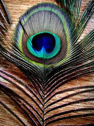 Обои на телефон павлин, шаблон, птицы, простые, природа, перо, минималистичные, красочные, животные