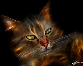 Обои на телефон коты, кошки, животные, gatos