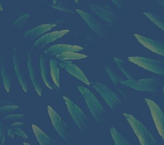 Обои на телефон флора, джунгли, синие, природа, лес, зеленые, green and blue
