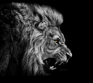 Обои на телефон страх, лев, животные, lion - no fear