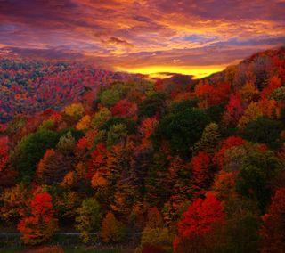 Обои на телефон растения, сезон, осень, листья, дерево, вид, autumn view