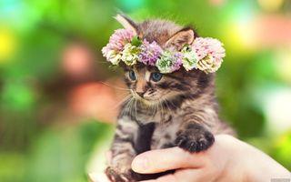 Обои на телефон милые, кошки, котята, коты, животные