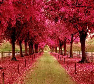 Обои на телефон путь, розовые, природа, прекрасные, пейзаж, крутые, дорога