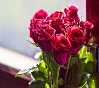 Обои на телефон розы, природа, пейзаж, красые, boquet