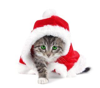 Обои на телефон счастливое, сезон, праздник, снег, рождество, любовь, декабрь, love