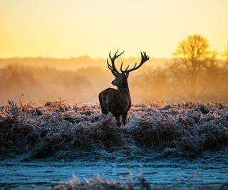 Обои на телефон олень, природа, животные, дикая природа, awareness