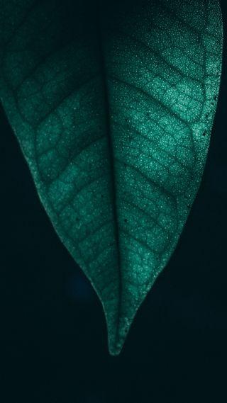 Обои на телефон макро, растения, природа, листья, зеленые