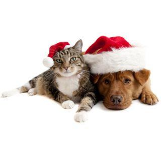 Обои на телефон питомцы, собаки, рождество, кошки, xmas pets