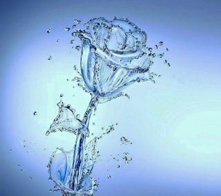 Обои на телефон мокрые, синие, розы, вода