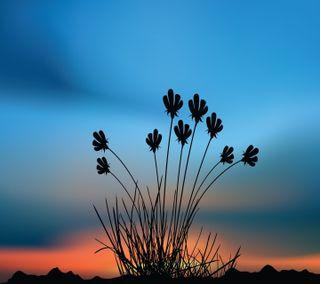 Обои на телефон пустыня, цветы, приятные, природа, ночь, новый, небо