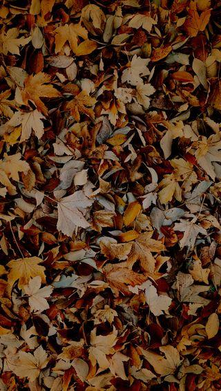 Обои на телефон упавший, реал, коричневые, природа, осень, оранжевые, натуральные, листья, the fallen