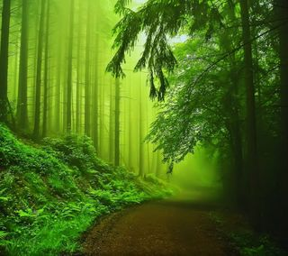 Обои на телефон туманные, туман, джунгли, природа, лес, зеленые, дорога, деревья, green nature