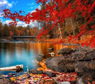 Обои на телефон озеро, осень, мост, листья, красые, камни, золотые, деревья