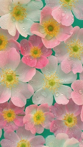 Обои на телефон капли, дождь, цветы, розовые, милые