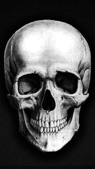 Обои на телефон скелет, n8, m9