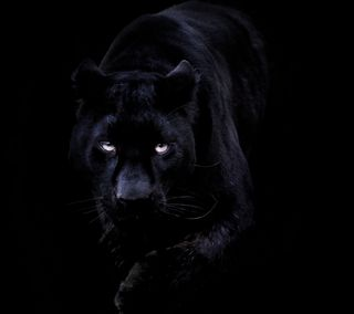 Обои на телефон пантера, черные, темные, кошки, животные