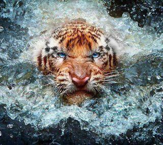 Обои на телефон брызги, тигр, животные, вода, tiger splash