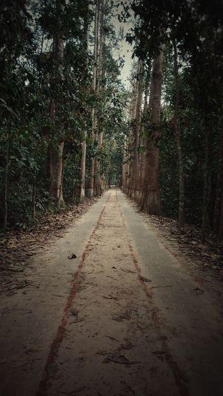 Обои на телефон тишина, природа, лес, зеленые, дорога, деревья, serenity 303, serenity