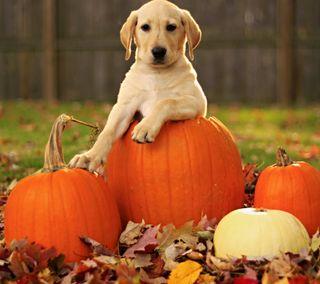Обои на телефон щенки, собаки, осень, милые, napkin, helloween, guardian, cute dog