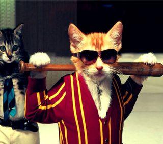 Обои на телефон плохой, кошки, ryjku, dykhr, bad cat