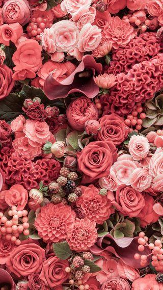Обои на телефон цветы, розы, розовые, природа, любовь, love