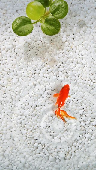 Обои на телефон мокрые, японские, рыба, песок, зеленые, белые