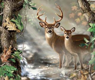 Обои на телефон джунгли, приятные, природа, листья, лес, животные, деревья, дерево