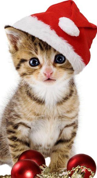 Обои на телефон рождество, кошки, животные, christmas cat