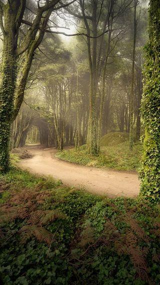 Обои на телефон туман, природа, лес, зеленые, дорога, treesnleaves