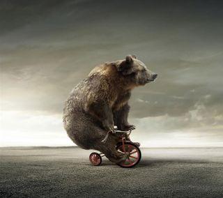 Обои на телефон медведь, природа, riding, hd