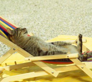 Обои на телефон релакс, солнце, приятные, крутые, кошки, забавные, hd, chillax