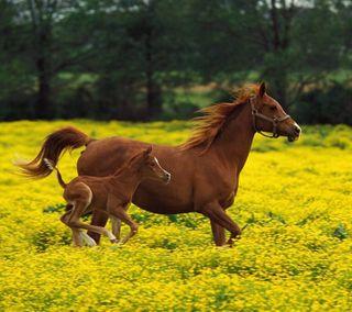 Обои на телефон лошади, пейзаж, horses and landscape, and landscape