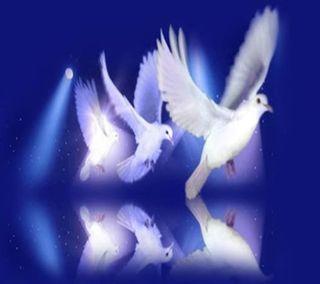 Обои на телефон животные, religioso, religiosas 003, espiritual