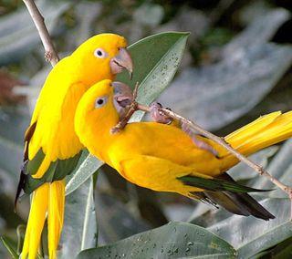Обои на телефон попугай, птицы, beautifully parrot