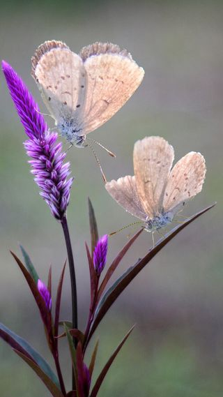 Обои на телефон трава, бабочки