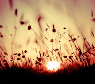 Обои на телефон мечты, цветы, солнце, поле, небо, луг, красые, закат, red dreams