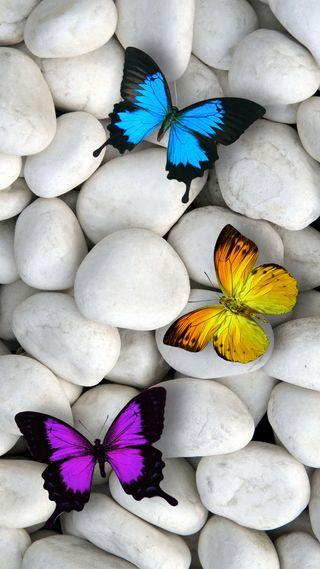 Обои на телефон камни, дизайн, белые, бабочки